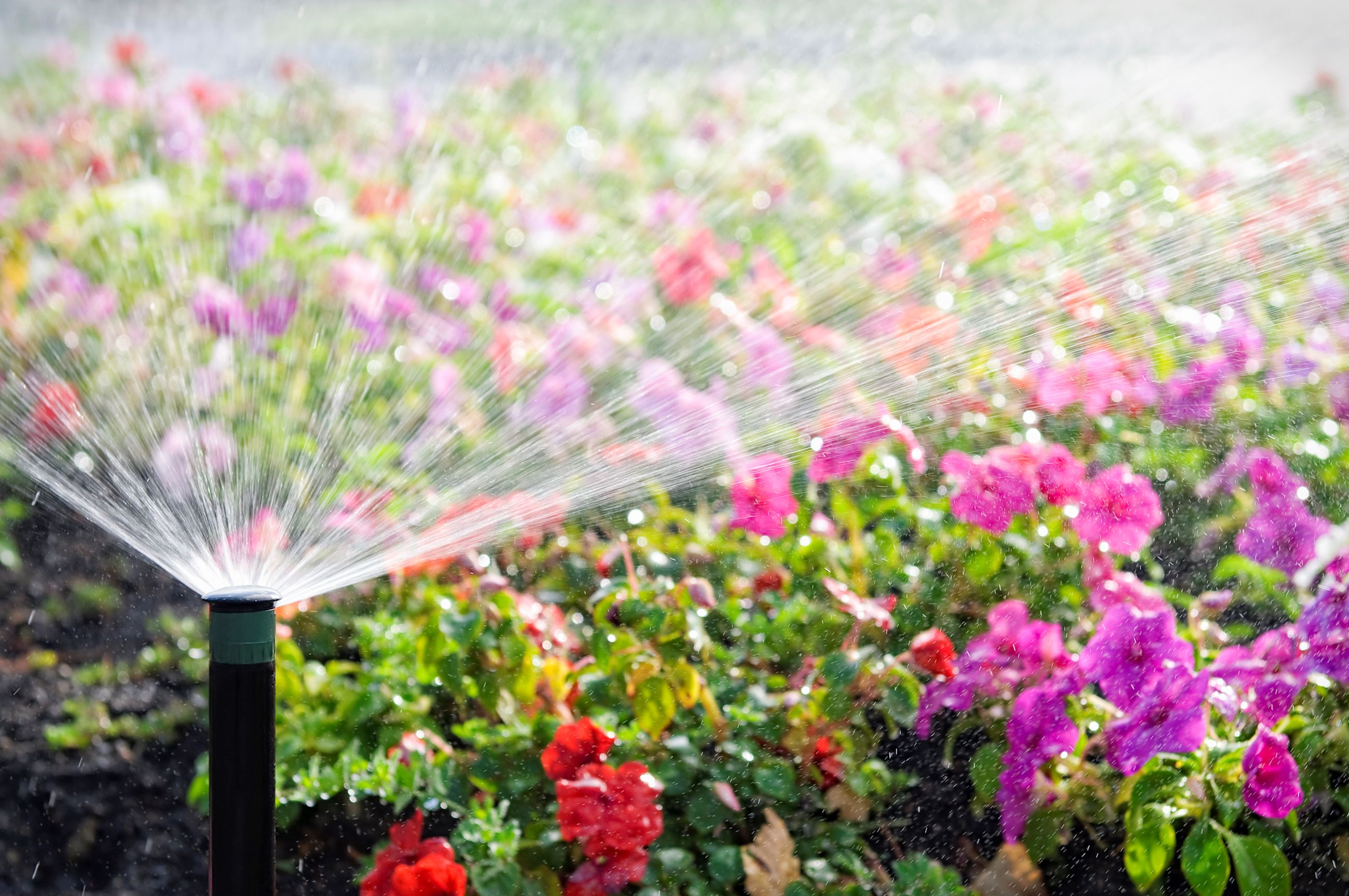 Sprinkler Flowers
