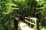 A wooden bridge surrounded by trees